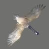 03 18 01 462 goose 02 4