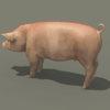 03 18 02 413 pig 04 4