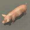 03 18 02 648 pig 05 4