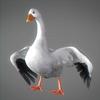 03 18 03 184 snowgoose 06 4