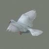 03 18 03 977 white dove 04 4