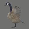 03 18 08 304 goose 07 4