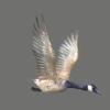 03 18 08 432 goose 08 4