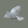 03 18 13 252 white dove 04 4