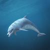 03 18 25 495 dolphin 02 4