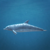 03 18 25 587 dolphin 03 4