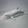 03 18 25 662 dolphin 05 4