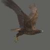 03 18 26 593 eagle 0002 4