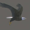 03 18 26 732 eaglebald 0001 4