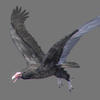 03 18 29 170 vulture red 03 4
