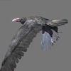 03 18 29 652 vulture red 05 4