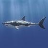 03 18 33 998 shark 01 big 4