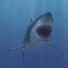 03 18 34 167 shark 04 4