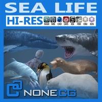 Pack - Sea Life 3D Model