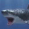 03 18 34 70 shark 02 4