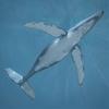 03 18 34 934 whale 03 4