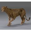 03 18 35 516 cheetah 01 4