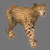 03 18 38 268 cheetah 10 4
