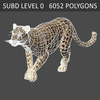 03 18 40 10 leopard 07 4