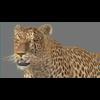 03 18 40 873 leopard new 01 4