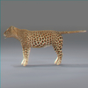 03 18 41 418 leopard new 04 4