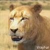 03 18 43 186 lioness 13 4
