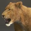 03 18 43 284 lioness 16 4
