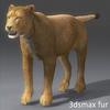 03 18 43 690 lioness 20 4