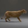 03 18 43 809 lioness 21 4