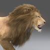 03 18 47 169 lion 03 4