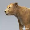 03 18 50 63 lioness 17 4