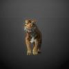 03 18 58 62 tiger 05 4