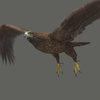 03 19 01 928 eagle 0001 4