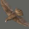 03 19 02 24 eagle 0004 4