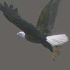 03 19 02 283 eaglebald 0002 4