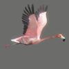03 19 02 716 flamingo 02 4