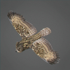 03 19 04 691 owl 0006 4