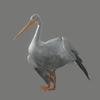 03 19 05 642 pelican 06 4