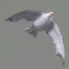 03 19 06 125 seagull hi 05 4