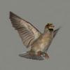 03 19 06 361 sparrow 02 4