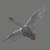 03 19 07 44 swan 02 4