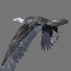 03 19 08 439 vulture white 0003 4