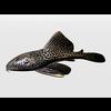 03 27 23 419 catfish1 4