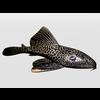 03 27 24 160 catfish4 4