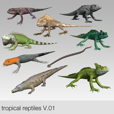 low poly tropical reptiles 3D Model