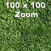 03 38 31 474 grass preview 3.jpg6d2b4df6 07bc 4f43 b145 ec4d572e5085larger 4