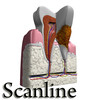 03 38 55 588 tooth   plaque preview scanline 11 copia.jpg6605753d c21f 4d32 91d8 e59725c2ab6flarger 4