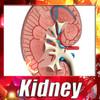 03 39 04 881 kidney   preview 02.jpg8a1133f9 7b9a 469b 8fd9 b74bb958bceflarge.jpg7c7047b0 fbd0 449c 93a4 a08801464460large 4
