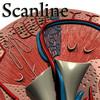 03 39 05 929 kidney   preview scanline 03.jpg618f8af1 551d 46d3 8b59 d1b4ae103bablarge 4