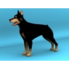 03 44 00 293 dog 02 4